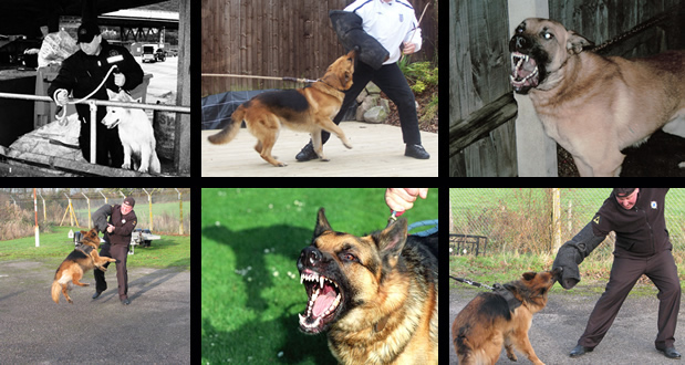 Protection/Search Dogs